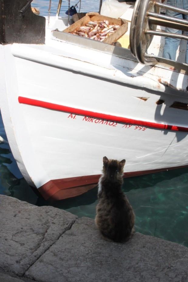 cruise Star Clippers Middelhavet Hydra Hellas greske øyer
