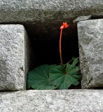 blomst-i-steinene
