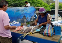fiskehandler-puero-ayora