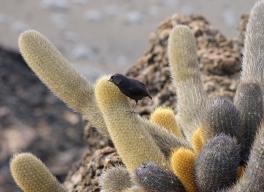fugl-og-kaktus