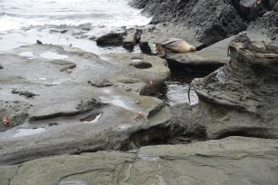sel-ogler-krabber
