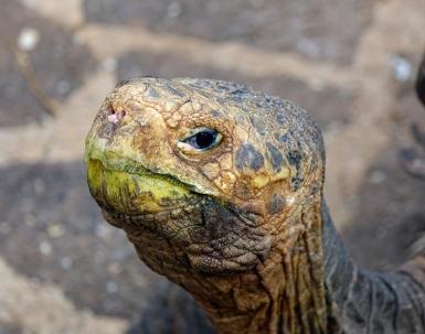 skilpadde-galapagos-national-park