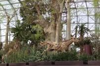 Bilde 11 Flower Dome4