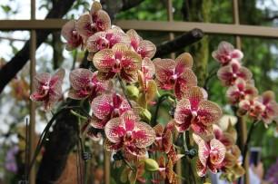 Bilde 19 Orchid Garden1
