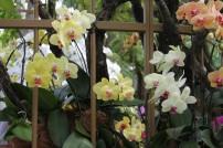 Bilde 20 Orchid Garden2