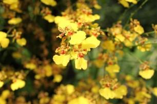 Bilde 21 Orchid Garden3