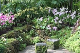 Bilde 22 Orchid Garden4