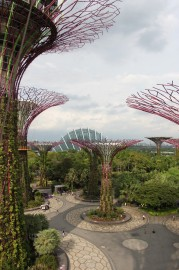 Bilde 6 Supertrees