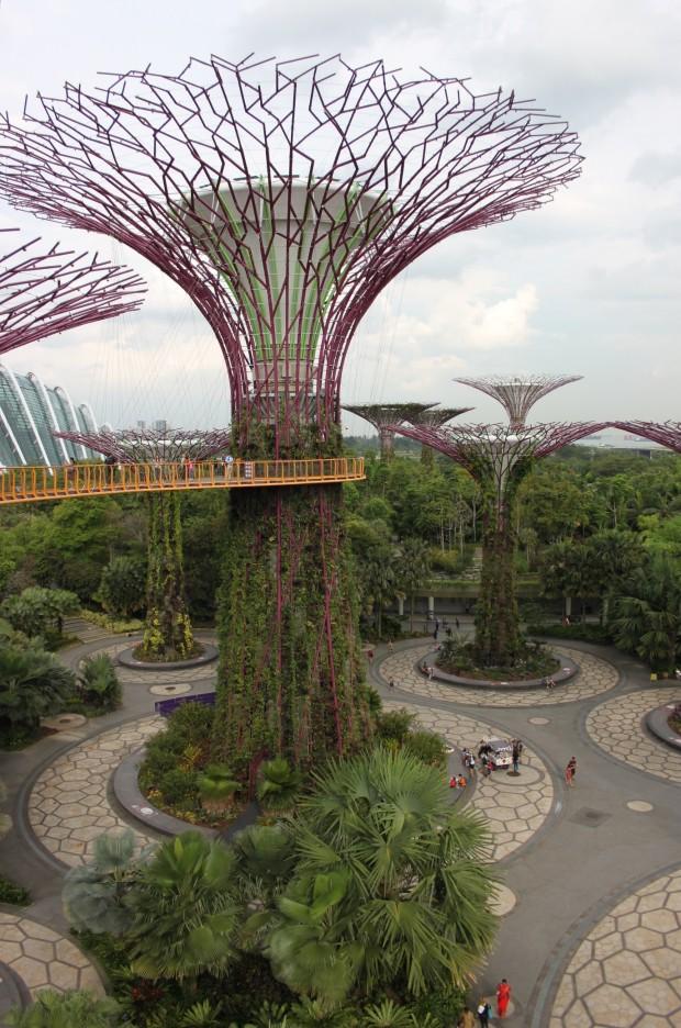 Bilde 7 Supertrees2